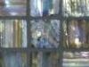 """Mahogany Pearl 1""""x1"""" Mosaic"""
